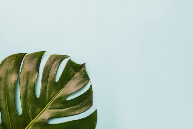 Big leaf on blue