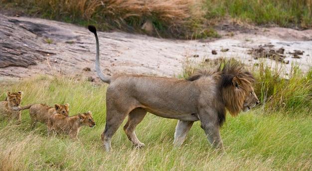 Большой лев-самец с детенышем