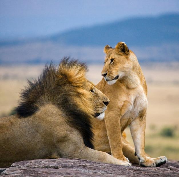 Большой лев-самец с великолепной гривой и львица на большой скале