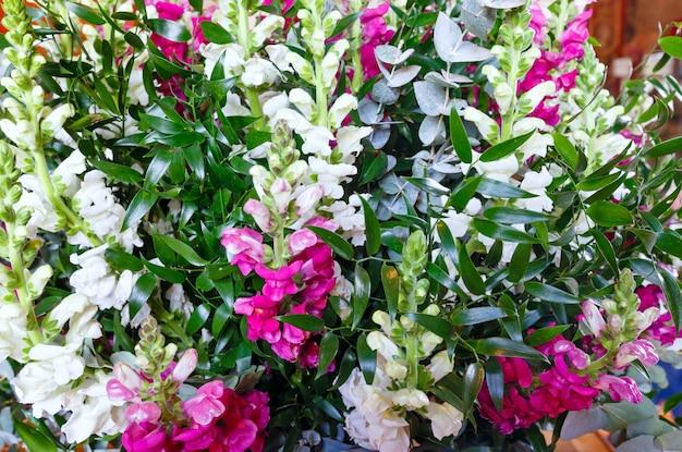 大きな多色白 - ピンク - 赤の素晴らしい夏のルピナスの花の花束