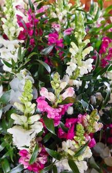 큰 여러 가지 빛깔의 멋진 여름 루핀 꽃 꽃다발