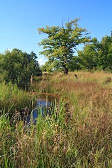 秋の沼の近くの大きなオーク