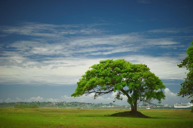 Большое старое дерево в зеленом поле с удивительным голубым небом и белыми облаками.
