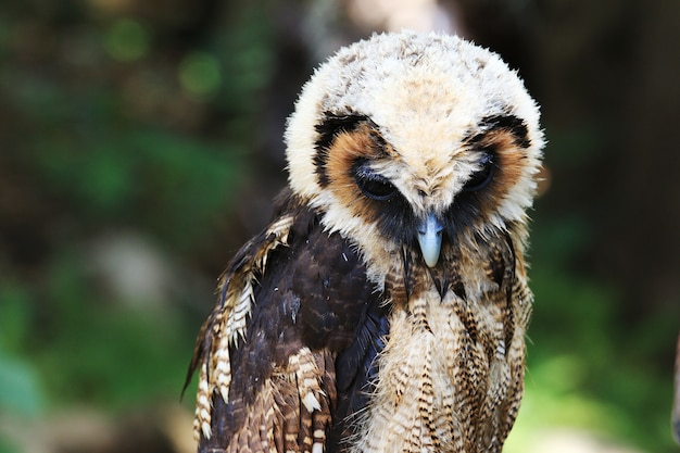 Big owl in green forest