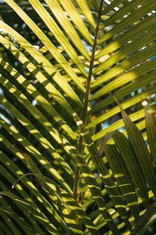 푸른 하늘과 햇빛에 덮여 큰 종려 잎