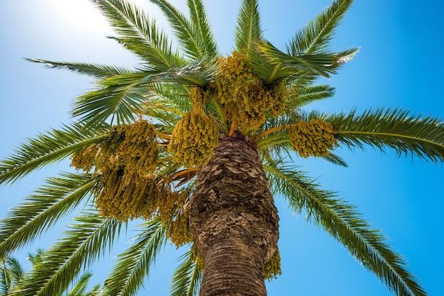 Большая пальма на фоне голубого неба