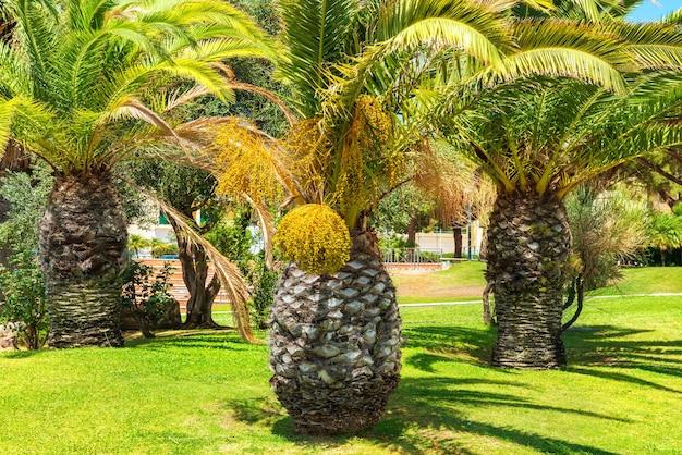 Big palm trees on blue sky background