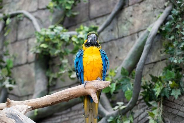 큰 앵무새 잉 꼬 지점에 앉아입니다.