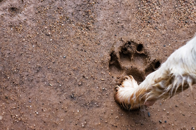 A big paw print of a small dog that thing that is bigger
