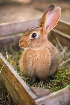 Большой кролик стоит в деревянном ящике с сеном и травой.