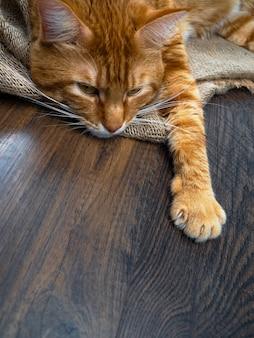 大きな赤い猫、コピースペース