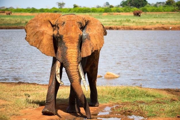 Большой красный слон после купания в водоем