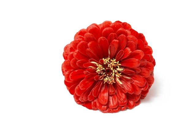 Big red flower isolated on white