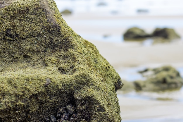 A big rock with fully covered moss near the sea close up view with selective focus