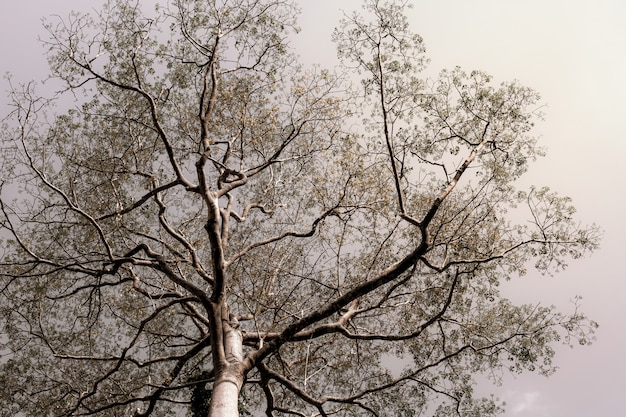 Big and scary tree with black branch veins against the sky .nature background