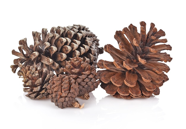 Big set of cones various coniferous trees isolated on white background