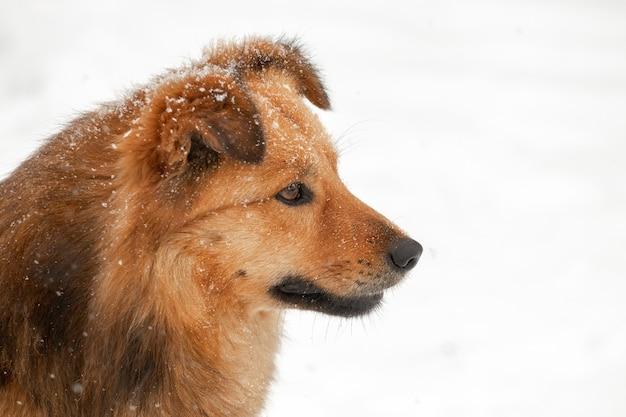 大きな毛むくじゃらの犬は明るい背景の冬のプロファイルでクローズアップ