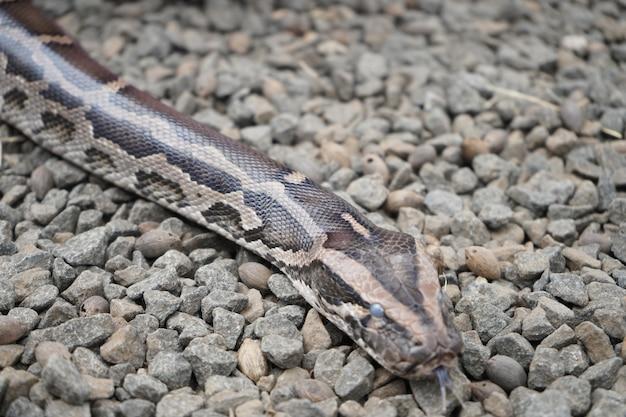 돌 바닥에 크롤 링 하는 큰 뱀