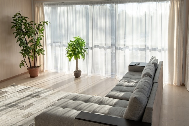 Big sofa, plants and a large windows interior decor with morning sunlight from the windows