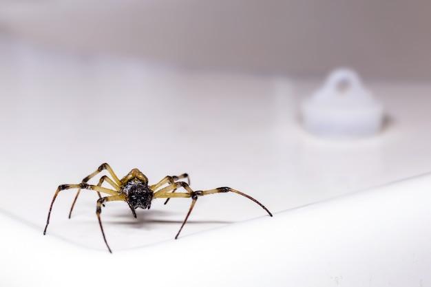 浴室の流しの中を歩く大きなクモ、毒動物、害虫駆除の概念