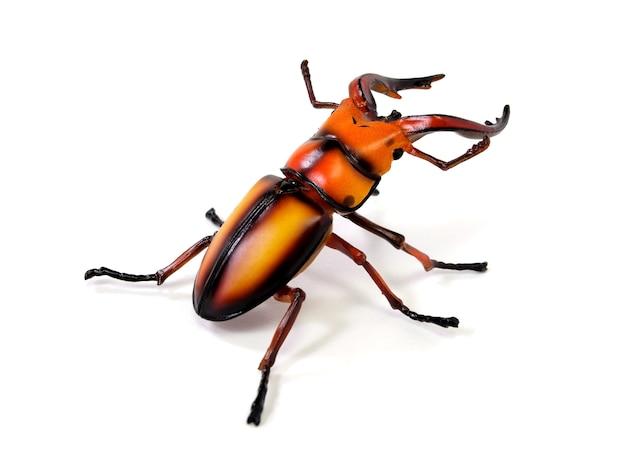 Big stag beetle (lucanus cervus)