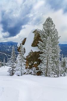 雪の山の上に大きな石とモミの木