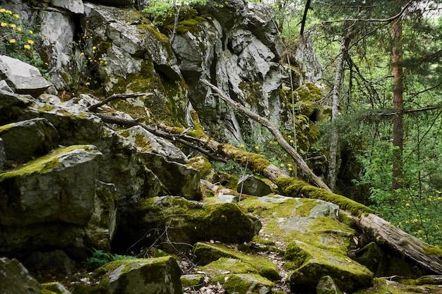 Большие камни покрыты мхом в зеленом лесу