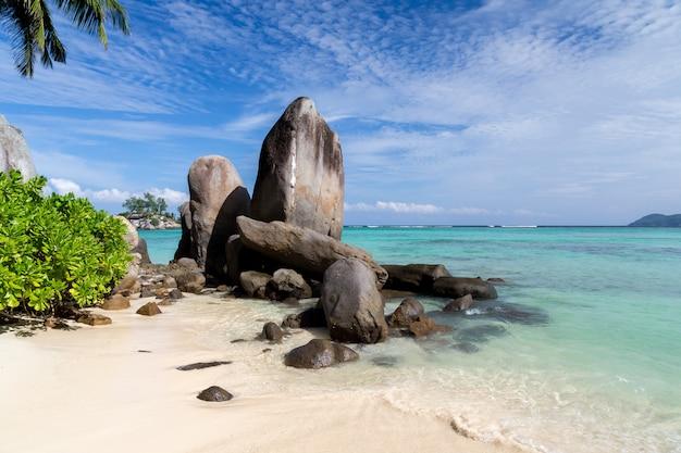 녹색 식물을 많이 가진 해변에 큰 돌