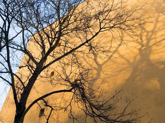 ベルリンの黄色い建物の壁にある大きな木とその影