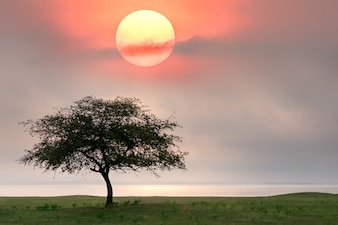 大きな木と空