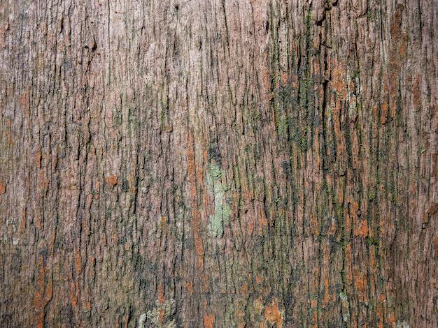 緑色の苔で大きな木の樹皮のテクスチャ。