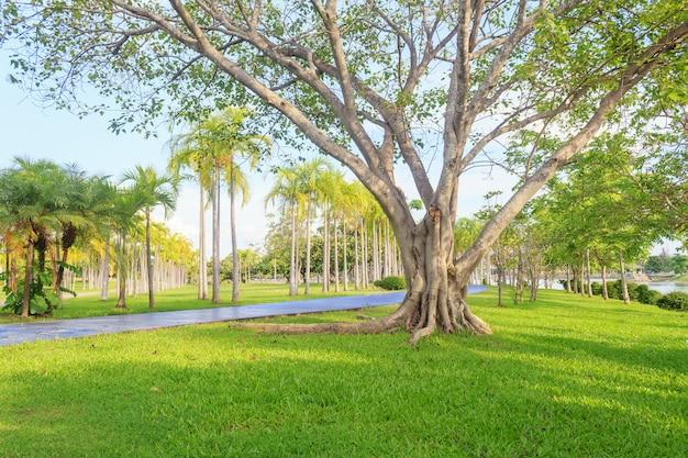 푸른 잔디 필드와 함께 공원에서 아름 다운 공원 현장에서 큰 나무