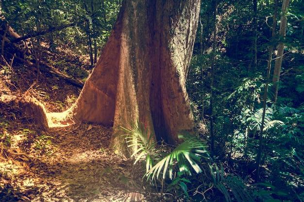 Большое дерево в джунглях тропических лесов. природа фон