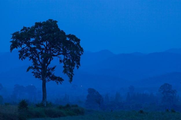 Большое дерево в открытом лесу в азиатских горах в сумерках.