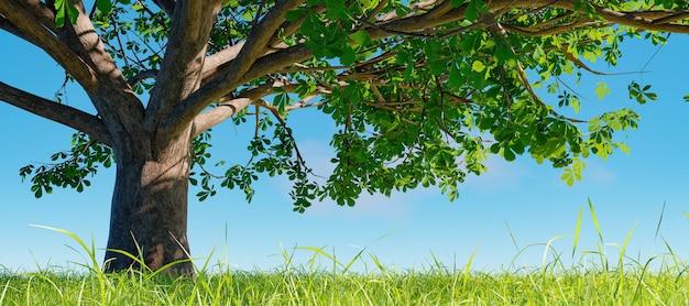 나뭇 가지의 그림자와 함께 잔디 초원에 큰 나무