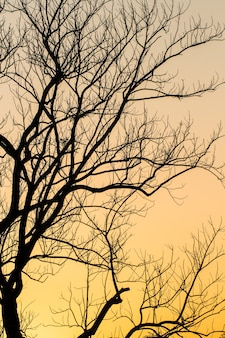 큰 나무 실루엣 일몰 하늘 배경