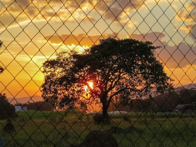 Большое дерево через забор на закате