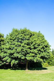 빽빽한 나뭇 가지와 나뭇잎이있는 큰 나무와 맑은 하늘