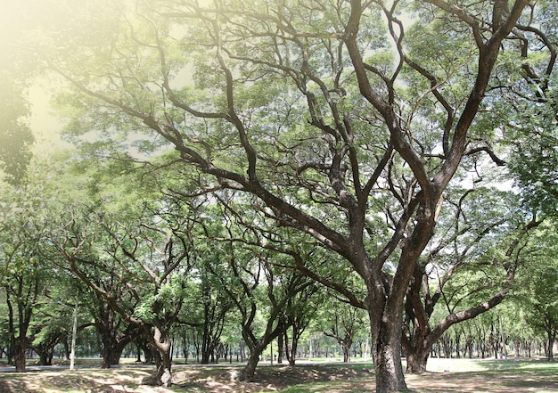 녹색 잎을 가진 큰 나무
