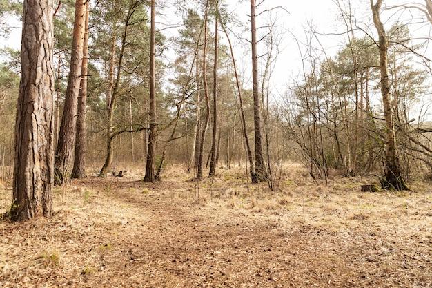 대 낮에 숲에있는 큰 나무