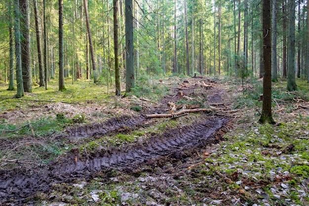 환경에 대한 숲 인간의 영향에 큰 트럭 트랙터 또는 불도저 로더 타이어 휠