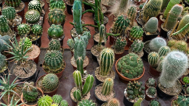 Big variety of cactus on the table in botanic green house top view