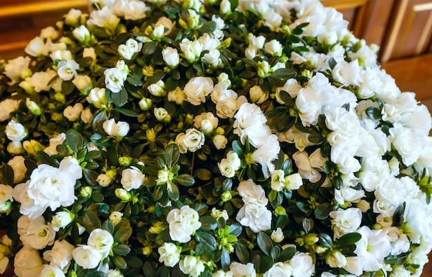 큰 흰색 진달래 멋진 여름 꽃 꽃다발