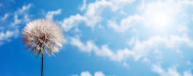Big white dandelion against the blue sky