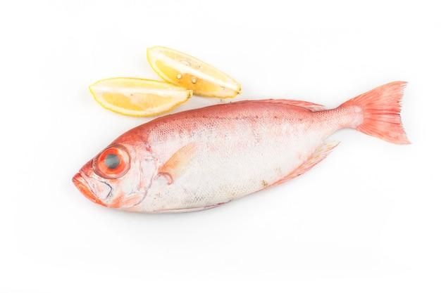 Большеглазая рыба, изолированные на белом фоне