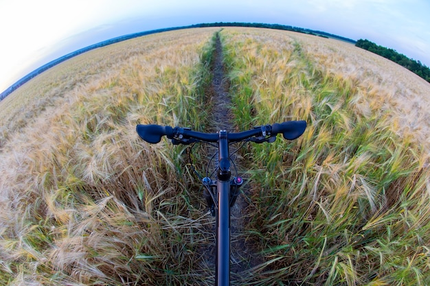 밀밭의 흔적에 자전거. 스포츠와 여행.