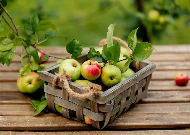 Био яблоки в коробке и на столе возле яблони в саду