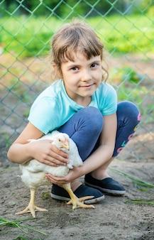 Bio chickens on a home farm a children.