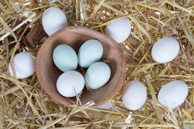 生物の卵の静物、コロロアアラウカナ鶏の卵も含む