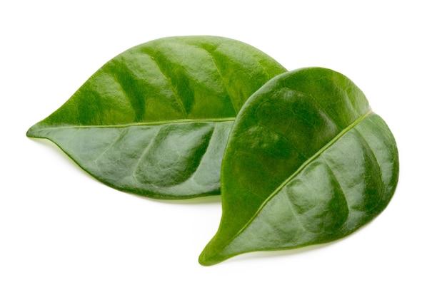 흰색 표면에 절연 바이오 녹차 잎